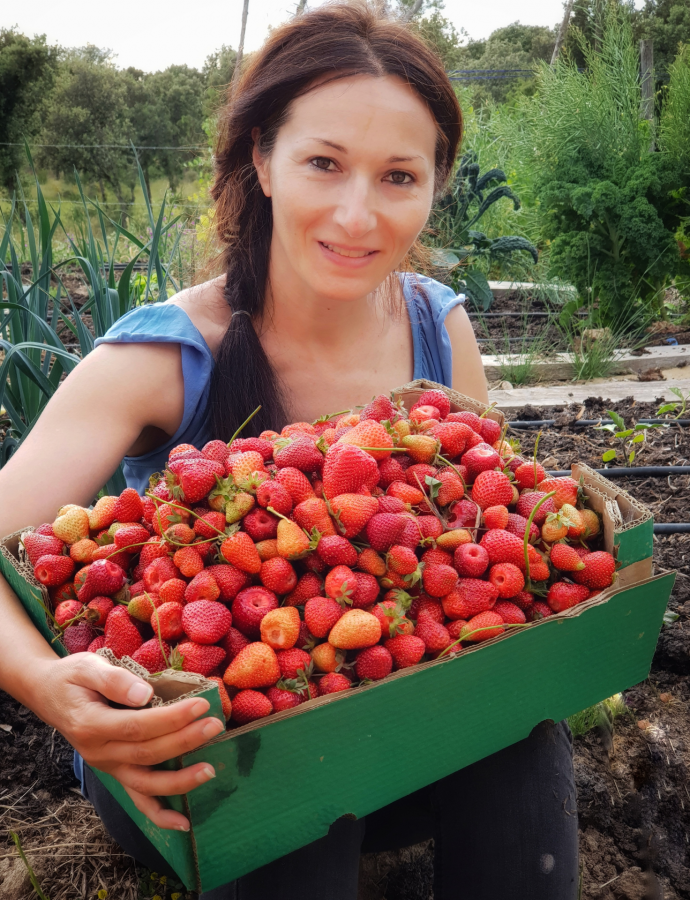 Como cultivar fresas sin arar la tierra