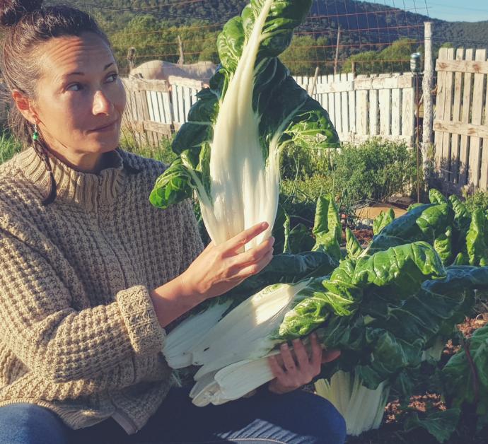 Como cultivar acelgas sin arar la tierra (no dig)