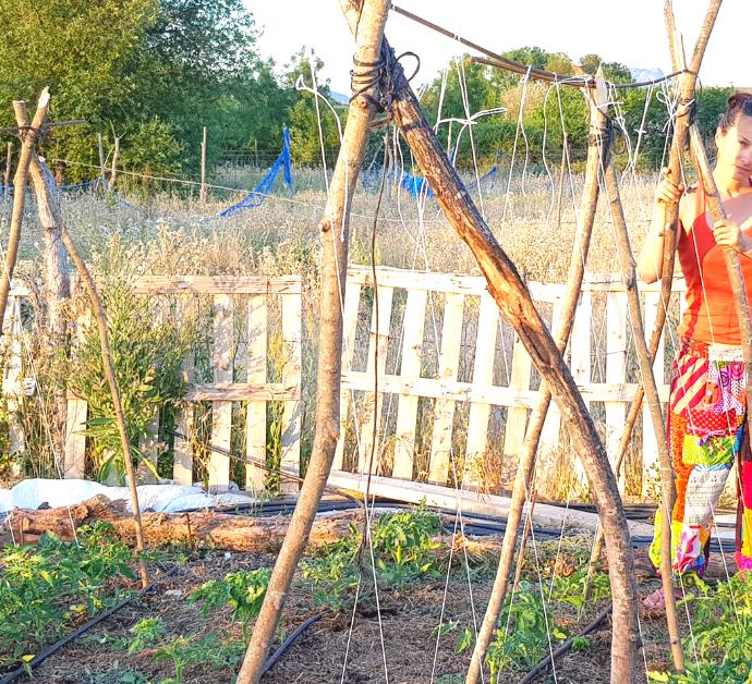 Como entutorar tomates con cuerdas
