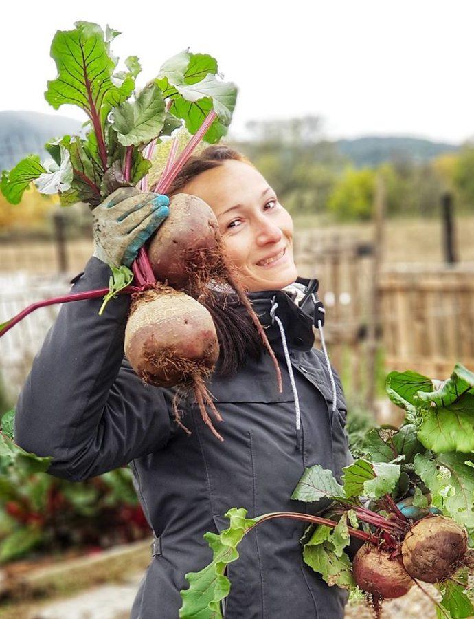 Como cultivar remolachas sin arar la tierra