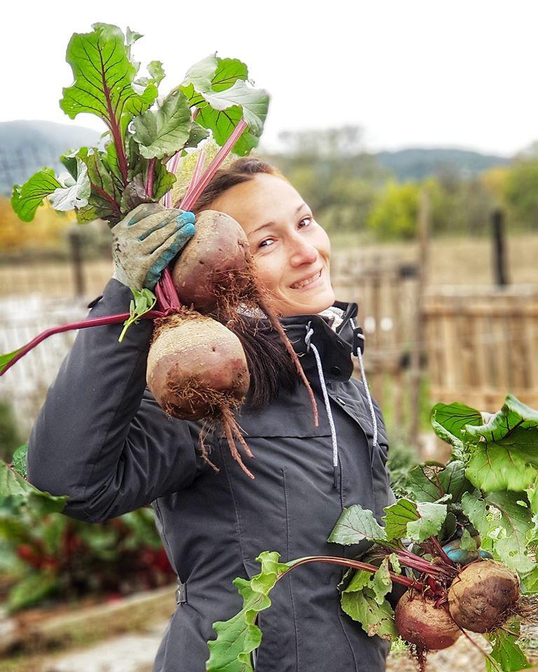 Como cultivar remolachas