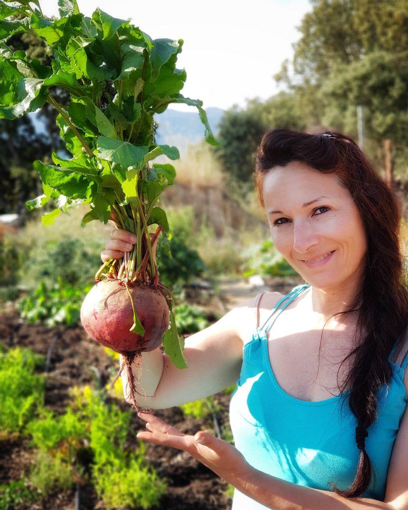 Cultivar remolachas sin arar