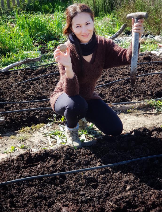 Como cultivar patatas sin arar la tierra