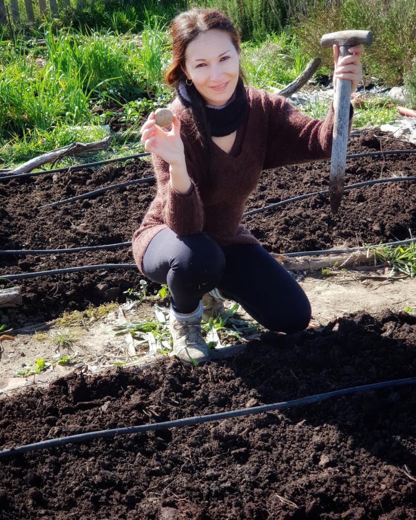 Cultivar patatas sin arar